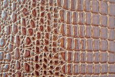 Free Crocodile Texture Stock Images - 6886954