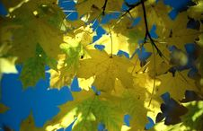 Free Sun In Autumn Leaves-4 Royalty Free Stock Images - 6887709