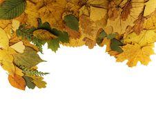Free Autumn Frame Royalty Free Stock Photos - 6887828