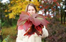 Free Young Woman Holds Bouquet Of Autumnal Leaves Stock Photography - 6887842