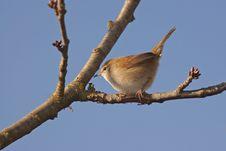 Free Bird 2 Stock Photography - 6888832