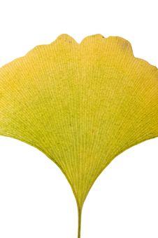 Free Ginkgo Leaf Stock Image - 6889451