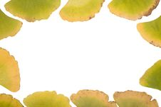 Free Ginkgo Leafs Frame Stock Images - 6889464