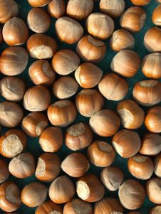 Free Hazelnuts  Background Royalty Free Stock Images - 6889649