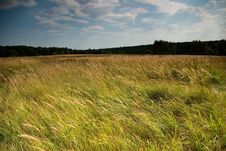 Meadow In A City Park In Moscow Royalty Free Stock Image