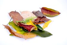 Free Autumn Leaves On White Stock Images - 6889794