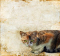 Free Cat On A Grunge Background Stock Image - 6892161