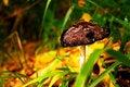 Free Magical Mushroom Royalty Free Stock Images - 6897839