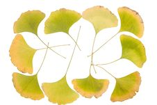 Free Ginkgo Leafs Frame Royalty Free Stock Photography - 6890467