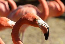 Free Pink Flamingo Stock Photos - 6890673