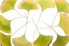 Free Ginkgo Leafs Frame Royalty Free Stock Images - 6891139