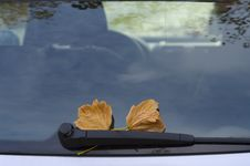 Free Autumnal Leaves On Car Glass Royalty Free Stock Image - 6892326