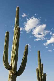 Free Cactus Against Blue Sky Royalty Free Stock Images - 6893099
