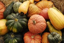 Harvest Of Pumpkins And Gourds Stock Images
