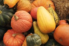 Harvest Of Pumpkins And Gourds Royalty Free Stock Image