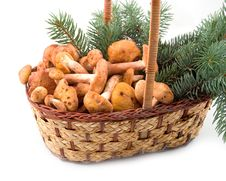 Free Honey Agarics At Basket Stock Images - 6893284