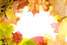 Free Autumn Leaves Frame Stock Photography - 6893992