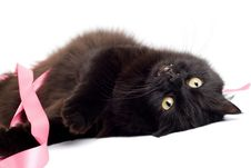 Free Black Cat Playing With Pink Ribbon Stock Photos - 6894003