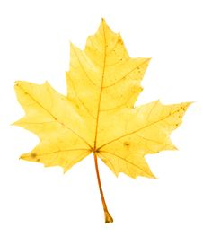 Free Autumn Leaf Stock Images - 6894074