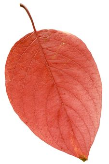 Free Autumn Leaf Royalty Free Stock Photography - 6894077