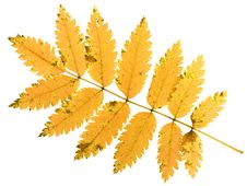 Free Autumn Leaf Stock Photography - 6894092