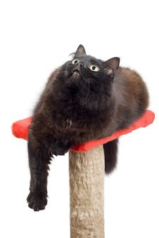 Black Cat Looking Up Isolated Stock Photography