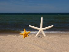 Free Two Starfishes Royalty Free Stock Photo - 6894915