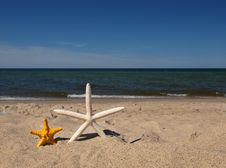 Free Summer With Starfishes Royalty Free Stock Photo - 6894995