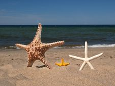 Free Three Starfishes Stock Image - 6895001