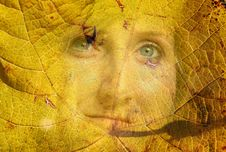Free Autumn Face Stock Images - 6895164