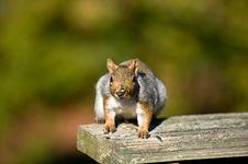 Free Squirrel Stock Images - 6897164