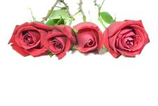 Free Red Roses Stock Photography - 6897402