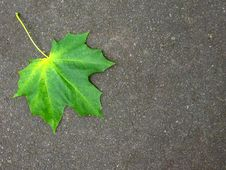 Free Fallen Leaf Royalty Free Stock Image - 6897636