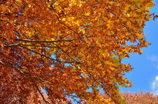 Abruzzo Fall Leaves Stock Photography