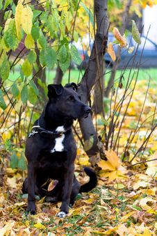 Free Sitting Dog Royalty Free Stock Photography - 6898087