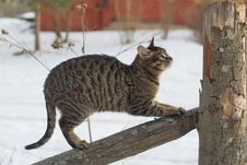 Free Cat On The Fence Stock Photo - 6898120