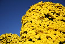 Free Flower Tower Royalty Free Stock Image - 6898616
