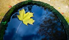 Free Leaf Floating In A Barrel Royalty Free Stock Image - 6898676
