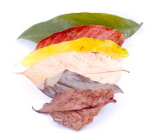 Free Autumn Leaves On White Stock Images - 6898724