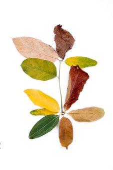 Free Autumn Leaves On White Royalty Free Stock Photo - 6898745