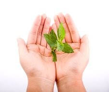 Free Holding Leaf Isolated Stock Photography - 6898752
