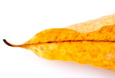 Free Leaf Isolated On White Stock Images - 6898754