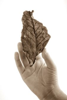 Free Holding Leaf Isolated Stock Photo - 6898780
