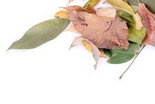 Free Autumn Leaves On White Stock Photos - 6898783