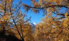 Free Snow Peak In Autumn Royalty Free Stock Images - 6898819