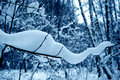 Free Winter Day. Stock Image - 692131