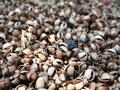 Free Dried Seeds Royalty Free Stock Photos - 693728