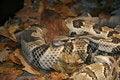 Free Snake Stock Image - 694221