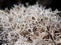 Free Sponge Seaweed Royalty Free Stock Photo - 695175