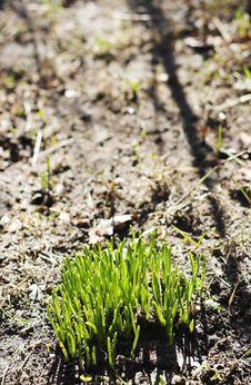 Free Green Grass Stock Photos - 690093